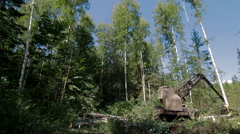 Forest Harvester in action Stock Footage