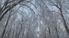 High angle view looking up at the branches of a snow covered forest Stock Footage
