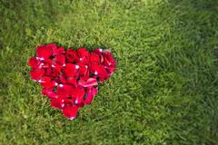Red heart from rose petals  on grass. Stock Photos