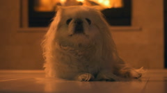 Dog sitting near the fireplace - stock footage