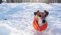winter cool dog active play disk - stock footage