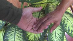 Black and White Hands Holding Eachother Stock Footage