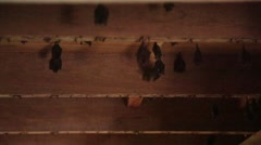 Bats perched on the ceiling of an abandoned house Stock Footage