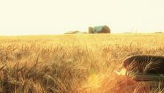 Bread In Wheat Field At Sunset Stock Footage