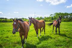 Horse paddock Stock Photos