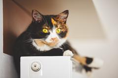 Cat is relaxing on the warm radiator - stock photo