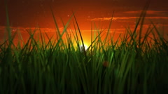 Moving through green grass during sunrise. Nature background. - stock footage