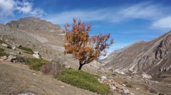 Yellow tree in the background of rocks Stock Footage