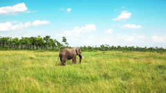 Elephants walking in savanna safari. Africa. Kenya. - stock footage