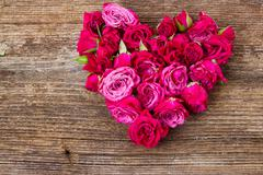 pile  of mauve roses - stock photo