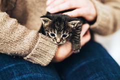 Man holding a tiny little tabby kitten Stock Photos