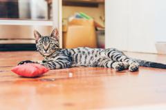 Grey tabby cat with pretty striped markings Stock Photos