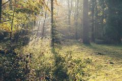 Sunbeam in foggy autumn forest. - stock photo