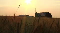 Golden Sunset On Wheat Farm In Summer Stock Footage