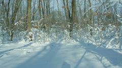 Winter in snowy forest, motorized slider Time lapse. HDR RAW shot Stock Footage