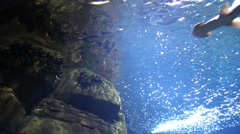 Fishes in an aquarium Stock Footage