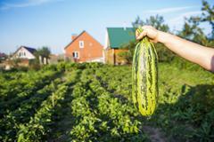 Gardener harvesting fruit in garden Stock Photos
