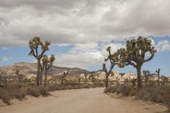 Empty road in rural desert landscape Stock Photos