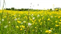 Flowery field Stock Footage