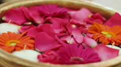 Flowers Rose Petals - stock footage