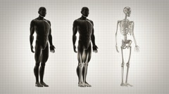 Three full length human bodies. Alpha matte. Black and White. Loopable. Stock Footage