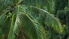 Coconut tree moving in slow motion - stock footage