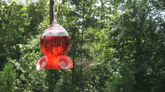 Humming Bird At Feeder Stock Footage