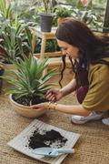 Caucasian woman planting potted plant Stock Photos