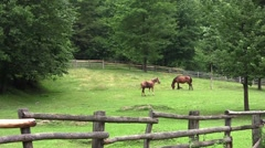 Brown horse standing on a fenced pasture and graze freely 1 Stock Footage
