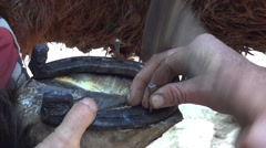 Farrier at work. He put horseshoes on a work horse hooves 2 - stock footage
