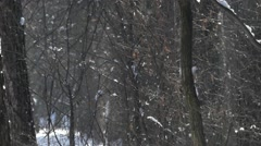 The sun in the winter forest at snowy weather. A wonderful scene of wildlife. Stock Footage