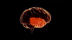 Human brain with regions lighting up and electrical impulses Loopable. Orange. - stock footage