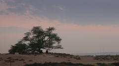 Tourist attraction in Bahrain: Tree of life during sunset. - stock footage