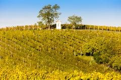 God''s torture with autumnal vineyard, Modre Hory, Southern Moravia, Czech Re - stock photo