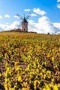 vineyard with windmill near Chenas, Beaujolais, Rhone-Alpes, France - stock photo