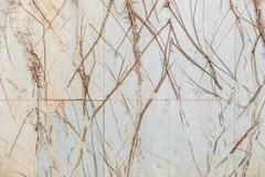 Tree roots covered cement walls at home Stock Photos