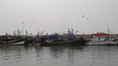 Fisherman boats with flying gulls essaouira, morocco Stock Footage