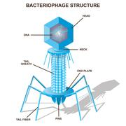 Virus bacteriophage model. Isolated vector illustration Stock Illustration