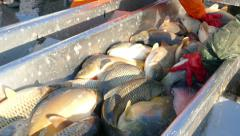 Fishing Industry Stock Footage
