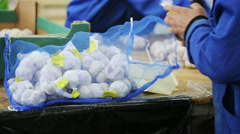 Woman packs up mesh bags with garlic - stock footage