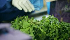 Pack and processing mint leaves. Vendors of food. Stock Footage
