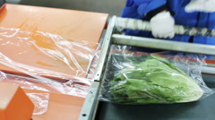 She wraps of Chinese cabbage salad. Packs in cling film Stock Footage
