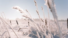 Camera moves from right to left, winter field Stock Footage