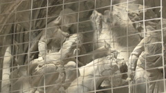 Stone sculptures on the facade of Stephansdom Cathedral, Vienna Stock Footage