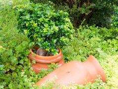 Antique Amphora in the garden - stock photo