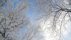 Clouds float above the trees in hoarfrost Stock Footage