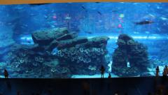 Huge glass wall, large aquarium with exotic fish. People walk and look to Stock Footage