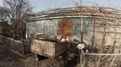 Several Hens Are Sitting in a Cage Under The Rays of Bright Spring Sun. - stock footage