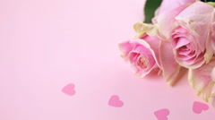 Pink roses on pink background. Stock Footage