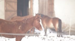 Foal three horses near the cage Stock Footage